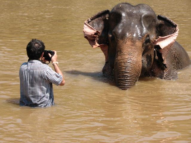 Respecter le monde animal